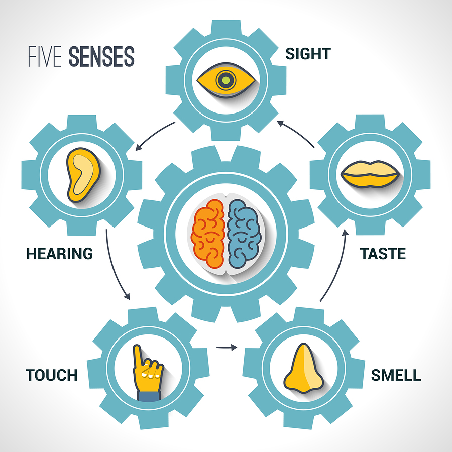 "5 senses First off, a definition of ""sense"": any system that consists of a group of sensory cell types that respond to a specific physical phenomenon and that corresponds to a particular group of regions within the brain where the signals are received and interpreted."